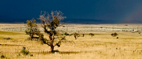 Australia: Grazing country around Berridale, Snowy Mountains, NSW