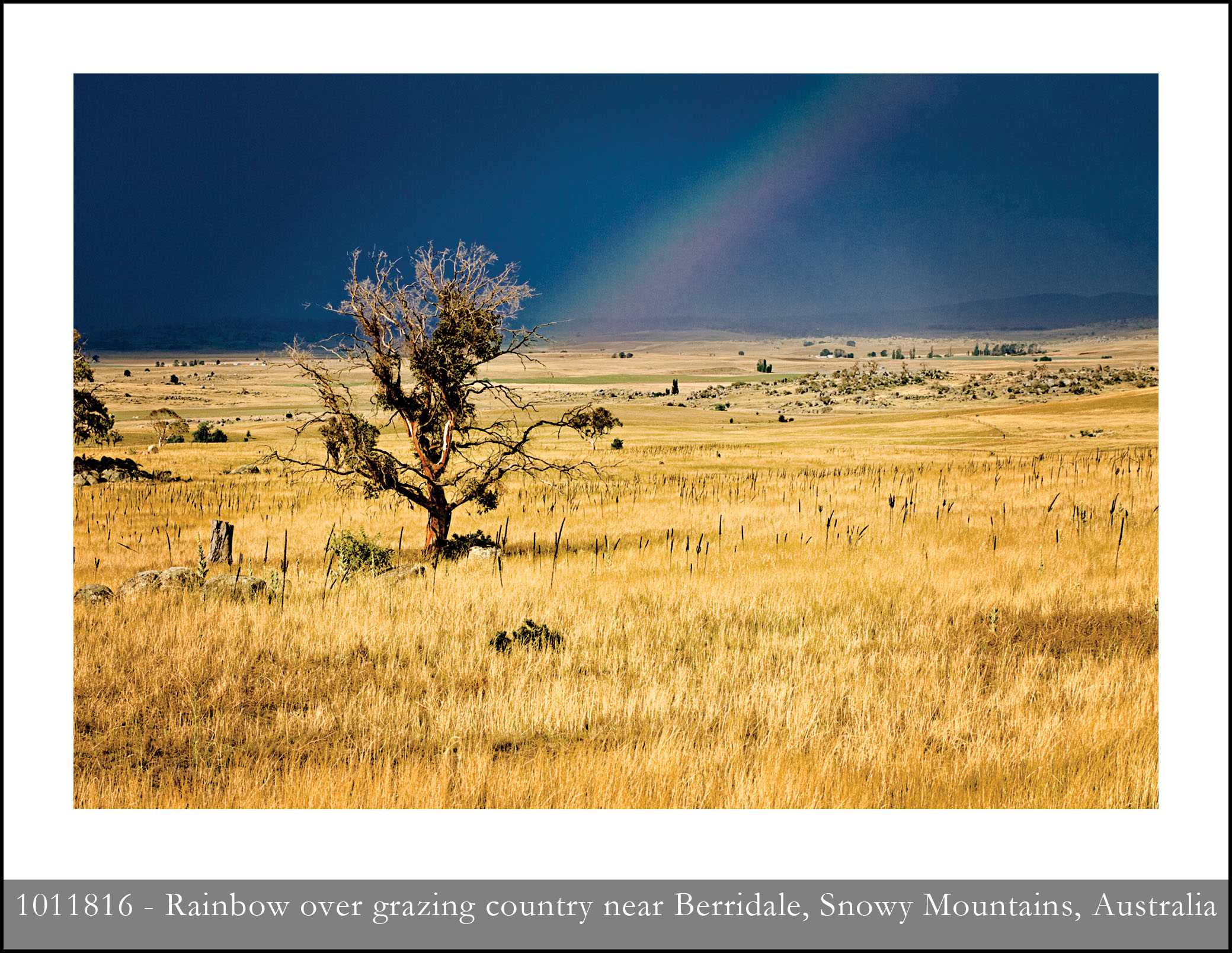 Australia: Grazing country near Berridale, New South Wales with
